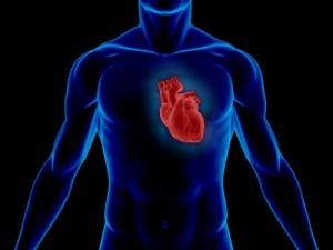 heart-cardiovascular